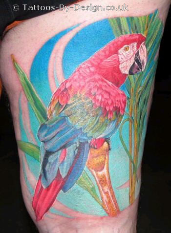Parrot pictures of tattoo